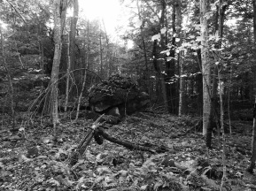 b&w photo vermont woods